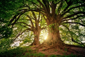 Naturcoaching Selbstfindung Selbstheilung Medialität Schamanismus